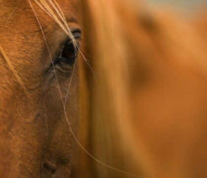 Why Horse Supplements Are Necessary for High-Performance Equines